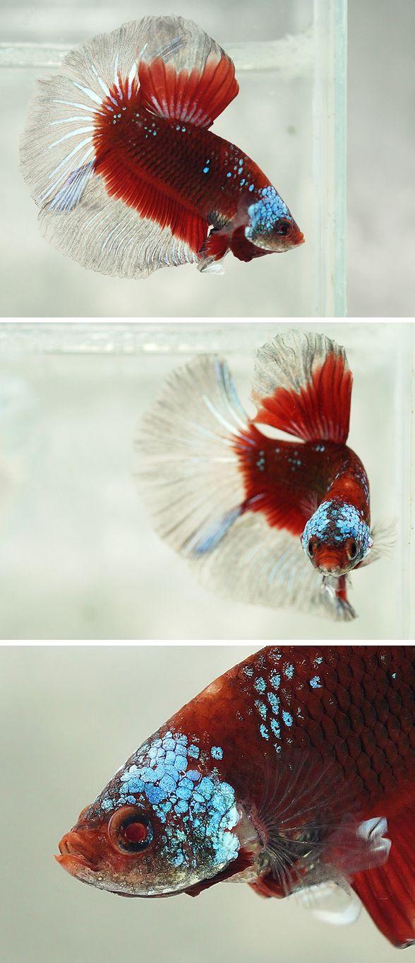 Red metallic pattern