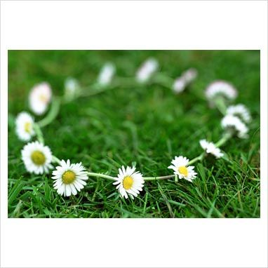 Daisy chain on grass. I used to make those all the time in Germany when I was little.