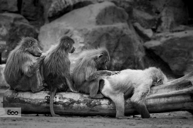 Safaripark Beeksebergen by Frank Kremer / 500px