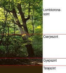"""Képtalálat a következőre: """"az erdő szintjei kép"""""""