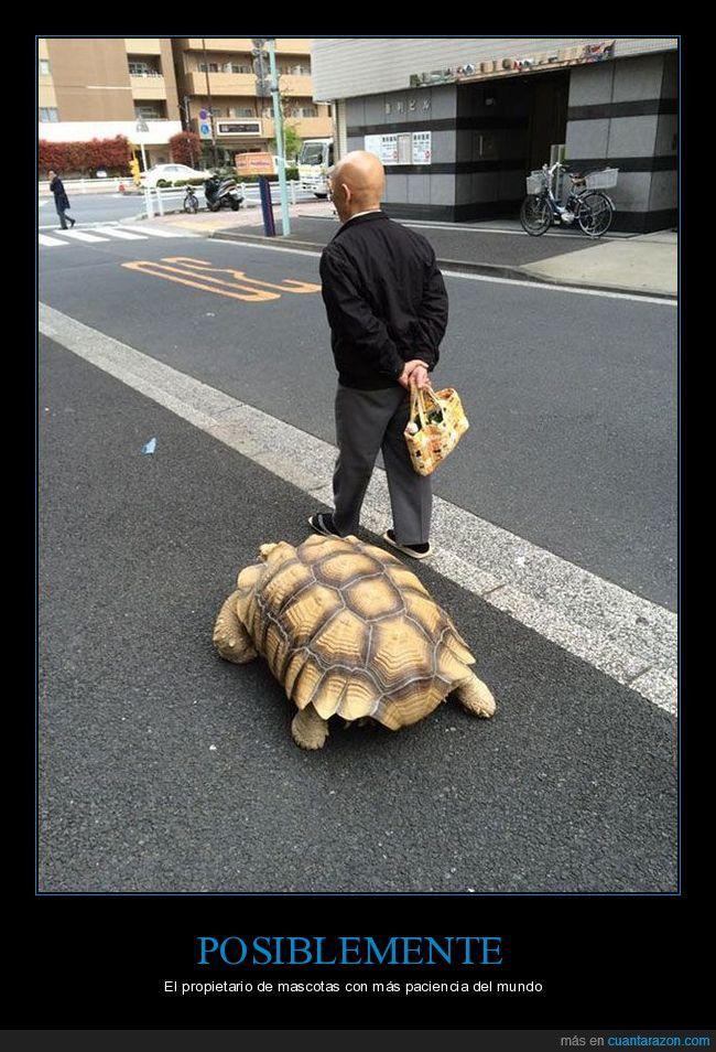 El entrenamiento del maestro tortuga - El propietario de mascotas con más paciencia del mundo   Gracias a http://www.cuantarazon.com/   Si quieres leer la noticia completa visita: http://www.skylight-imagen.com/el-entrenamiento-del-maestro-tortuga-el-propietario-de-mascotas-con-mas-paciencia-del-mundo/