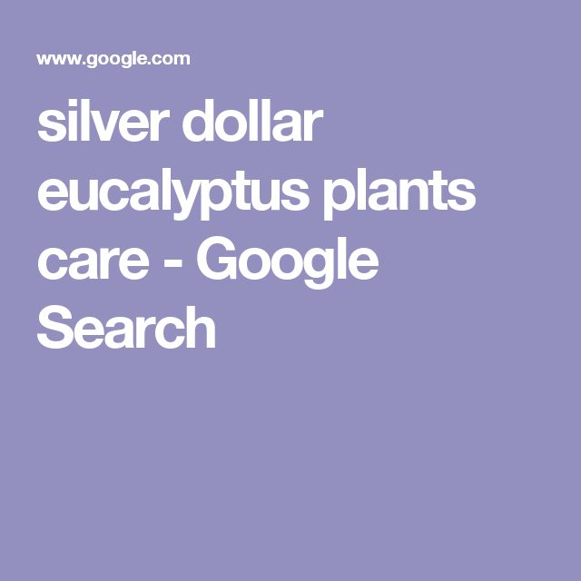 silver dollar eucalyptus plants care - Google Search