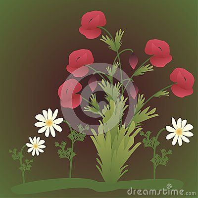 Poppy flowers and chamomile on a green background