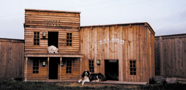 For that western adventure....the old saloon dog house.