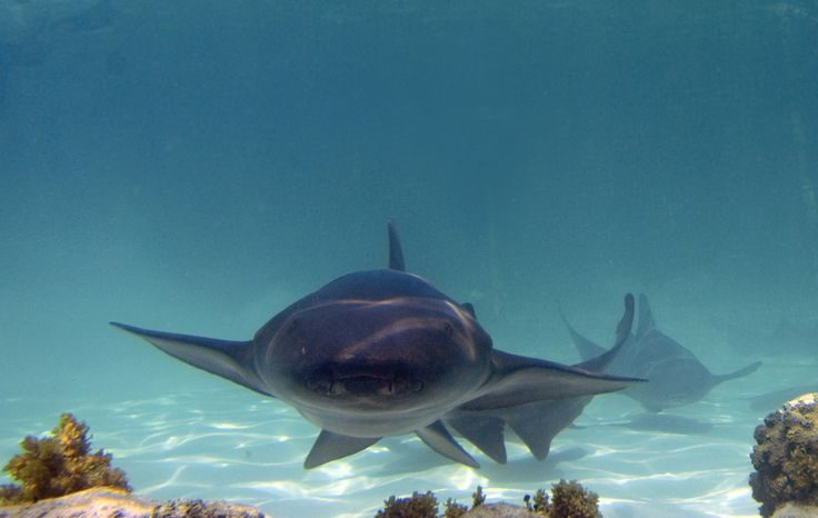 Marinarium Excursion... actually swimming with nursery sharks and stingrays!  In the Dominican Republic, Punta Cana!
