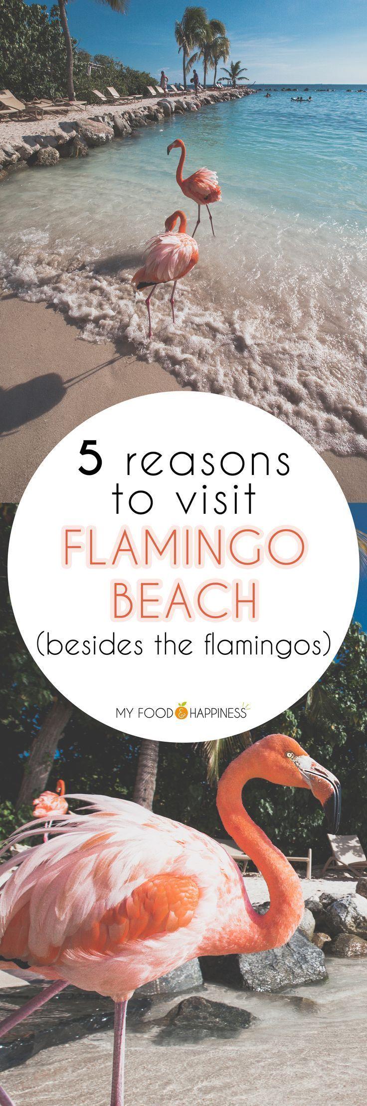 5 Reasons to visit Flamingo beach in