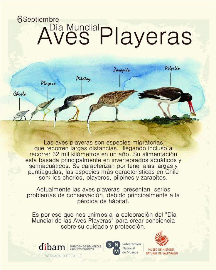 Ayudemos a la conservación y protección de nuestras aves playeras #DíaMundialAvesPlayeras  #WorldShorebirdsDay