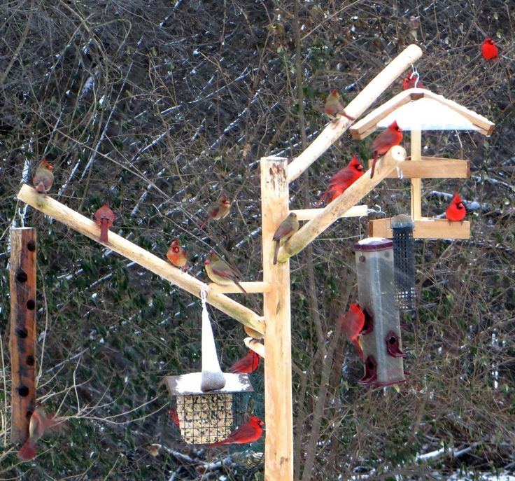 Our natural wood bird feeder poles are decorative, strong, and sturdy