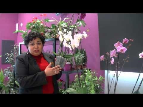 Cómo cuidar una Orquídea - Consejo SUPER AMARA - YouTube