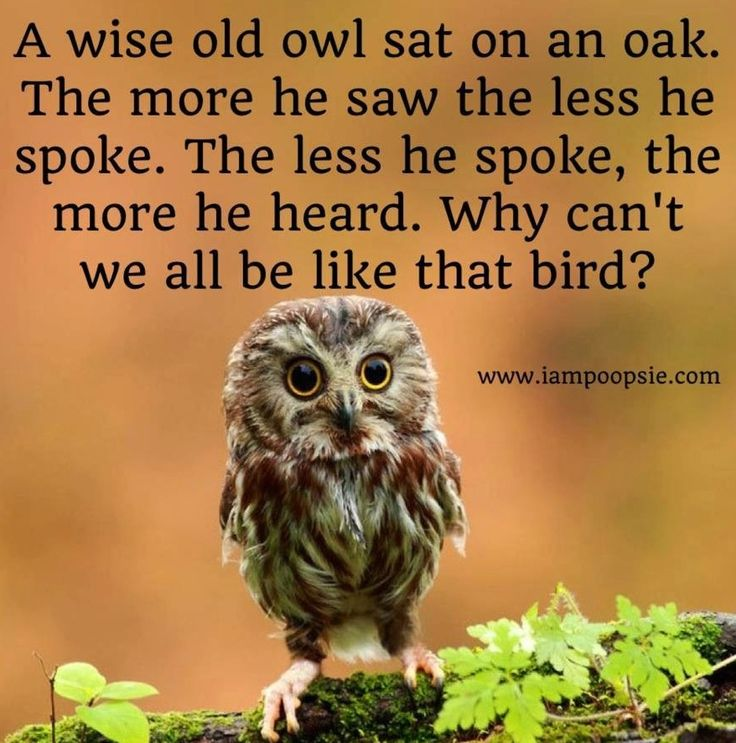 "Image result for ""A wise old owl sat on an oak; The more he saw the less he spoke; The less he spoke the more he heard; Why aren't we like that wise old bird?"""