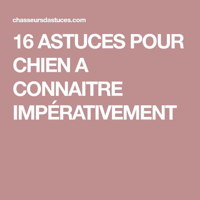16 ASTUCES POUR CHIEN A CONNAITRE IMPÉRATIVEMENT
