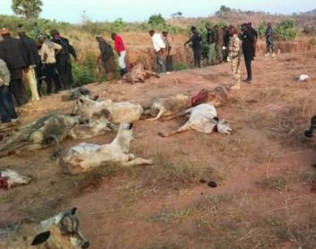 Humanrights lawyerIG Wala shared graphic photos of what he alleged to be the killing of two herdsmen and their cows by irate youths inPlateaustate. Read what he wrote on his Facebook page below..  THE ORGY OF SENSELESS VIOLENCE AGAINST THE FULANIS CONTINUES UNABATED!  It is now fast becoming a tragedy of biblical proportions. There seems to be a carefully planned agenda to exterminate the Fulani Herdsmen with their pastoral way of life in Nigeria for political religious and tribal…