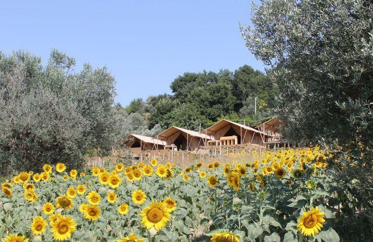 Glamping - Countryhouse Il Girasole    Overnacht in een luxe safaritent met het gezin (5 personen). Vlakbij de Adriatische zee.