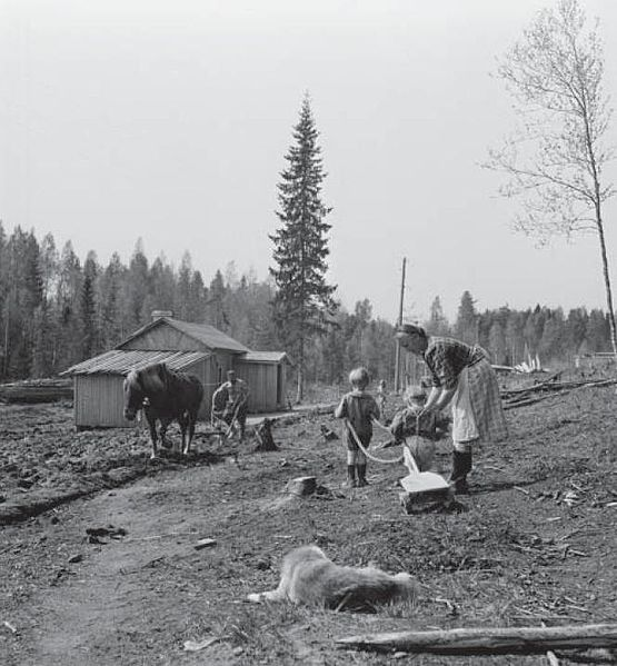 Finnish Karelian family, ca. 1945, of Alpo Rautia, evacuated from Karelia as a result of the Second World War, has been allocated land and is now building a homestead into the forest in Askola, Southern Finland. In many cases, including this family, the homestead was but a plot of forest. The house needed to be built and the fields had to be cleared by the family. Note the fir tree which has been left standing by the house. - Finland - Finnish horse