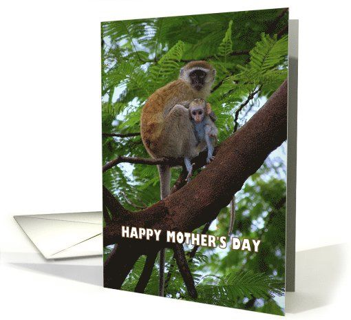 Happy Mother's Day Monkey Mother and Child Humor card #Vervet #Zimbabwe http://www.greetingcarduniverse.com/holiday-cards/mothers-day-cards/animals-pets/monkeys-primates/greeting-card-1026631?gcu=42967840600