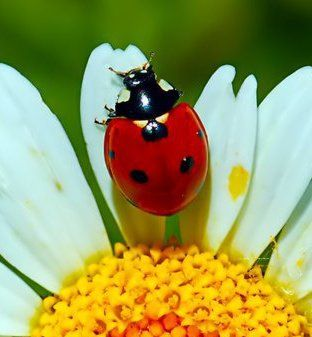 Image result for ladybugs