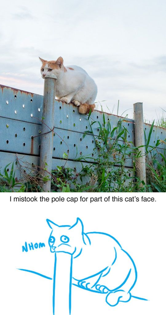 """It wasn't until they said that they """"mistook"""" it for part of the cat's face that I realized that it wasn't XD"""