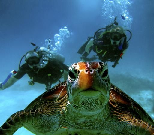 Port Douglas Diving -- We're already booked for a day of diving on the barrier reef :)