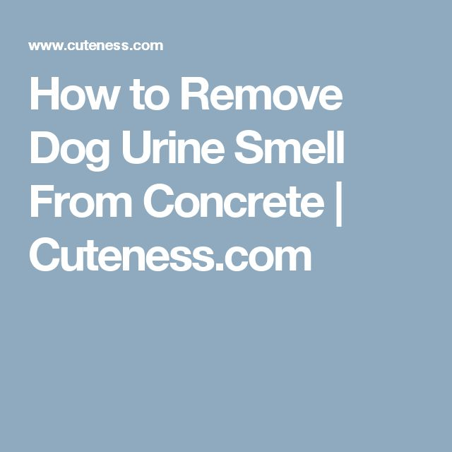 Dog Urine Smell How to Remove Dog Urin...