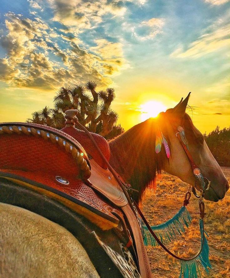 Best Ever Pads  custom western saddle pad, trail riding Los Angeles, sunset