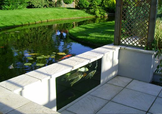 Pond glass google zoeken water pinterest pond koi for Koi pond window