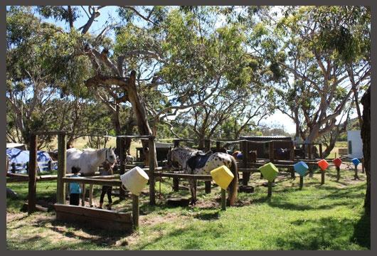 Horse riding at Bimbi Park, Great Ocean Road, Australia.