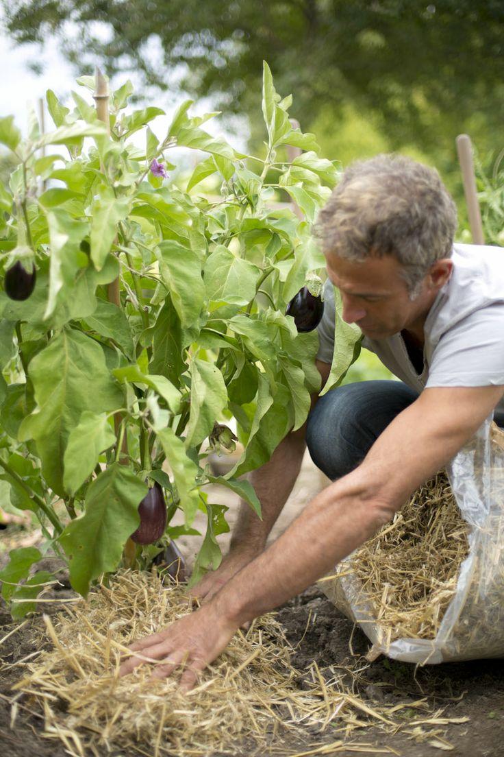 Pailler est un geste utile à bien des égards : il réduit l'évaporation de l'eau dans le sol, évite l'installation des herbes indésirables et protège le sol de l'érosion.