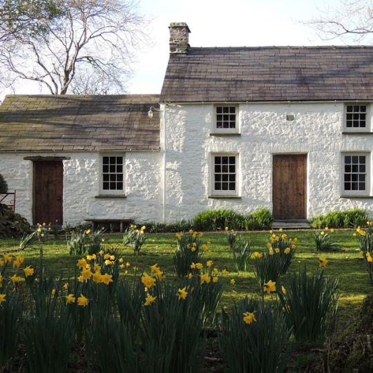 Cottage in the countryside in Wales...love the daffodills in front