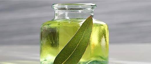 Eucalyptus Globulus - Les huiles essentielles indispensables – Série : 3