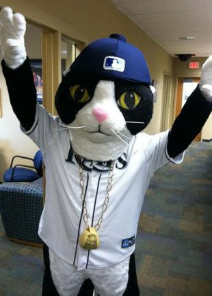"""DJ Kitty: Tampa Bay Rays' New Mascot  ---  """"No need to adjust your monitors, folks.That really was a cowbell-wearing, hip-hop kitty stalking the front offices of the Tampa Bay Rays on Wednesday."""" // This is REAL!!!"""