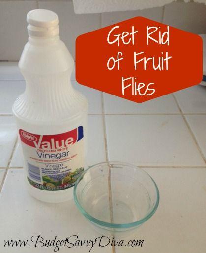 fruitvliegjes! zet een schaaltje met appel-cider- azijn en een druppel afwasmiddel