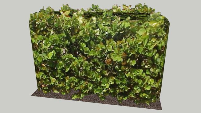 Sea-grape Hedge 6' 4 - 3D Warehouse