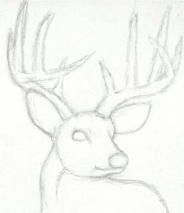 how to draw a deer head, buck, dear head step 3