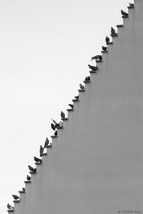 proust73:  Pigeons Stairs By©Stefan Holl