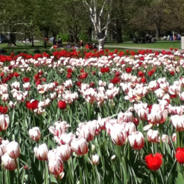 Ottawa is full of colorful tulips this month......so glad we came!!!