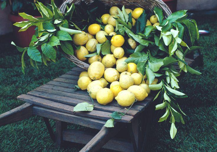 #Lemon harvest on #Lakegarda. #lemontree @Lago Di Garda Lombardia #typicalproducts
