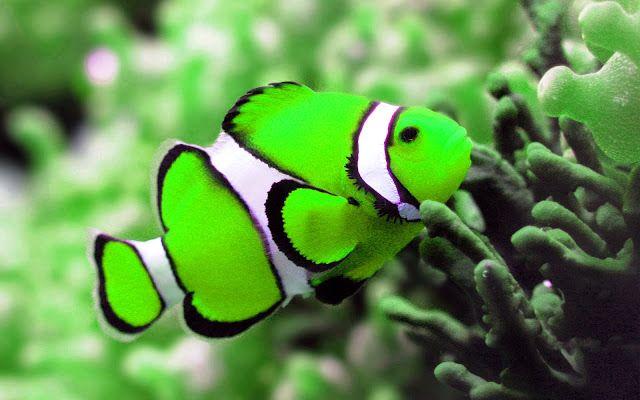 Tropische vis groen met strepen | HD Wallpapers