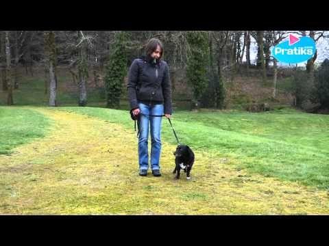 Comment apprendre à votre chien à marcher au pied - YouTube