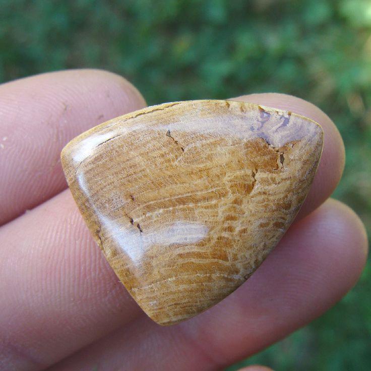 Kabošon z večného dřeva Zkamenělé dřevo: je kámen proměn. Pomáhá těm, kdo žijí ve starých budovách. Všeobecně zpomaluje proces stárnutí a je vhodný pro archeology, knihovníky, historiky a ty, kdo studují stará náboženství. Použijte jej na ochranu lesů a jejich zalesnění. Použijte jej pro spojení s moudrostí stromů, stažení vědomostí od moudrých duchovních ...