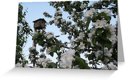 """""""Apple Blossoms With Bird House In Appleville"""" Greeting Cards & Postcards by Sandra Foster 