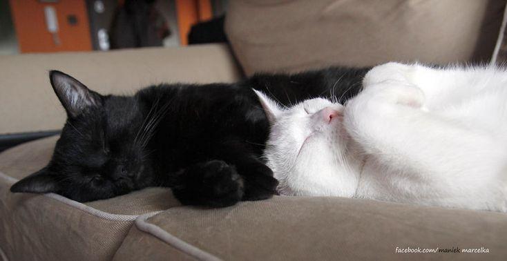 Dua Kucing Hitam-putih Yang Punya Gaya Tidur Lucu, Karena Memang Hobinya Tiduuuurrr Melulu