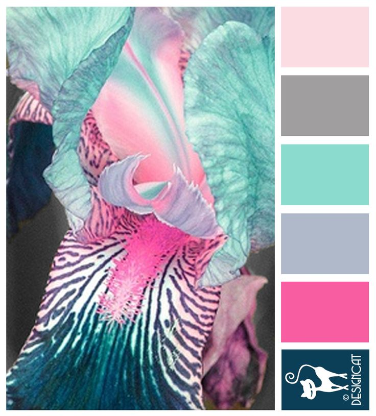 """Pink & Blue Iris - Teal, Blue, steel, sky, grey, blush, pink - Designcat Colour Inspiration Pallet"""