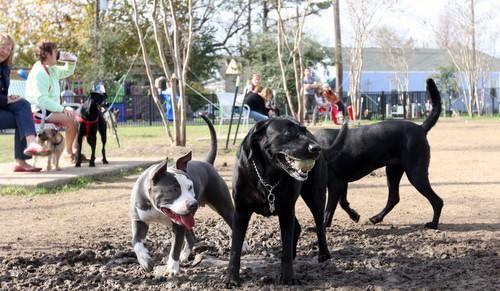 Wisner Dog Park