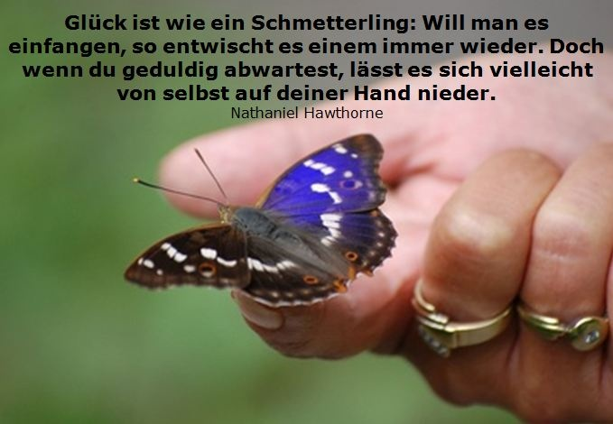 Glück ist wie ein Schmetterling (Nathaniel Hawthorne) #quote #zitat #lebensweisheit: Is Like, Nathaniel, The View, Life Truths