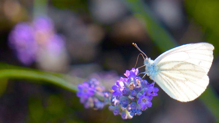 Butterfly working.