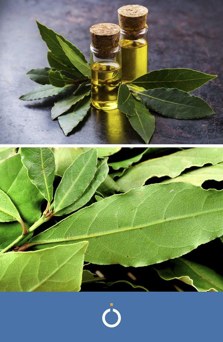 come preparare il tè di eucalipto per dimagrire