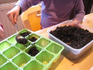 Planting sunflower seeds with kids and adding a little science.