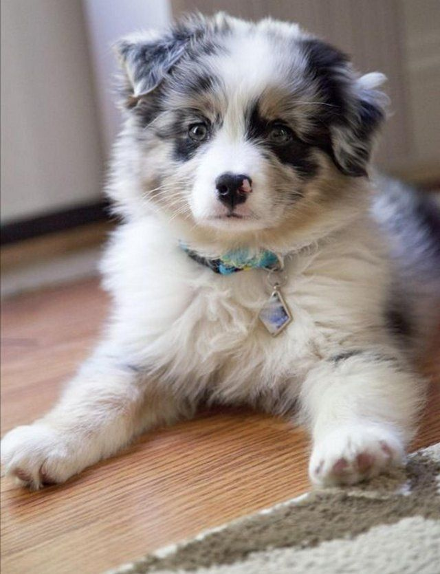 Dogs Puppies Rehome Buy And Sell Preloved In 2020 Puppies