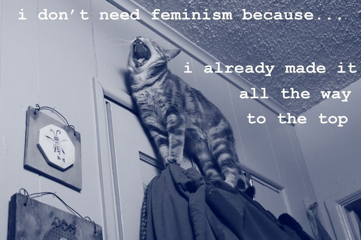 Confused Cats Against Feminism is a project of We Hunted the Mammoth