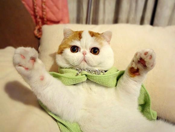 Draw So Cute Animals To Draw Cute Cartoon Animals From Movies Cutestcatsandkittensever Cutest Cats Ever Snoopy Cat